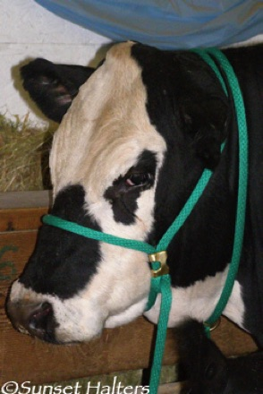 derby rope cow halter