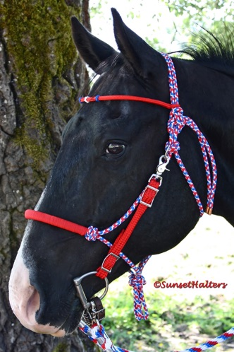 diamond braid, rope halter, halter bridle, trail