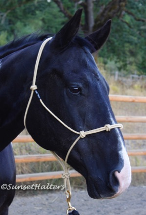 diamond braid, rope halter, training halter, extra. nose band, noseband, knots