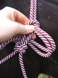 rope halter, tie off, latch knot