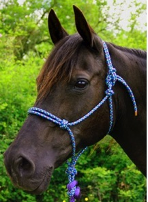 diamond braid, rope halter