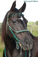 diamond braid halter bridle